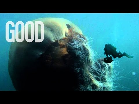 Attack of the Giant Jellyfish! | GOOD