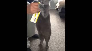 Коты и Витамины