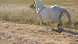 i hate my horse