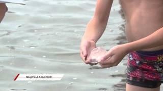Веселые медузы омрачают отдых горожан