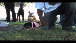 "Expert Dog Trainer: Larry Hill's Imprinting Tips ""hidden Dangers Of The Retractable Leash/lead!"""