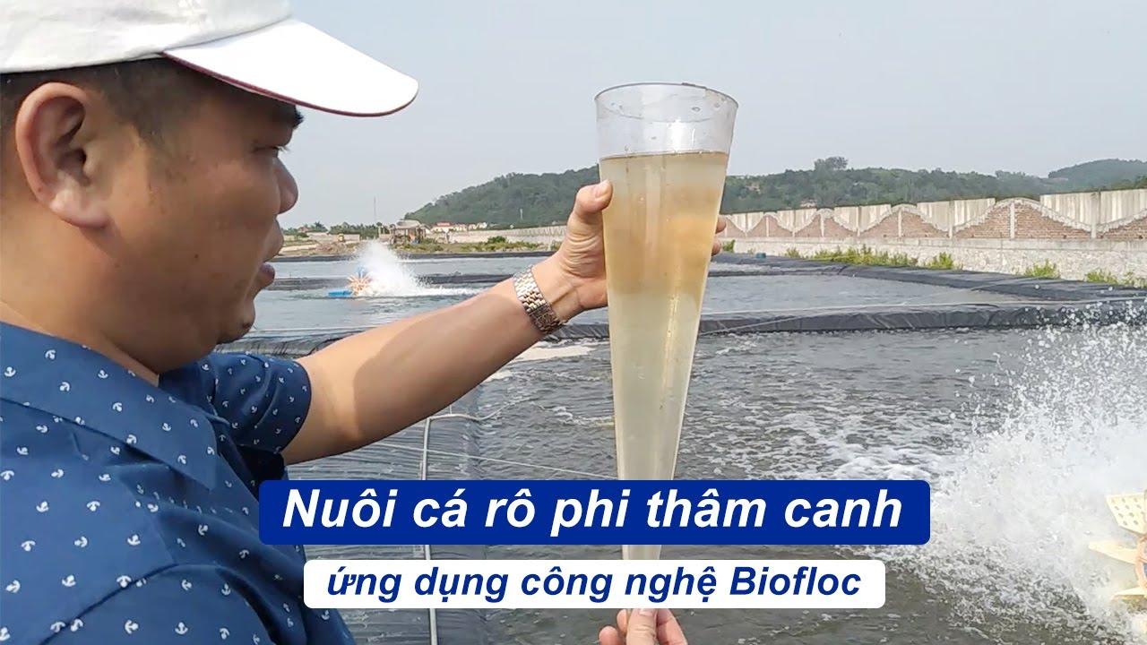 Nuôi cá rô phi thâm canh ứng dụng công nghệ Biofloc