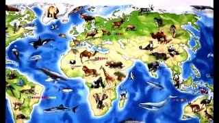 видео Океаны Земли – сколько их 4 или 5 (карта, название)