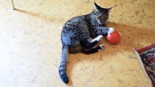 Лёгкая конвульсия у кошки. The cat has an easy convulsion.