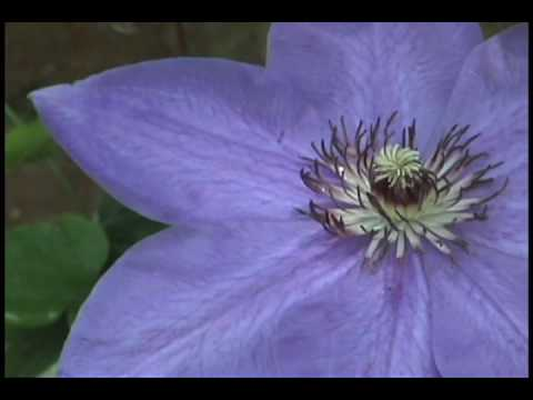 Flowers & Classical Music - Relaxation and Beauty