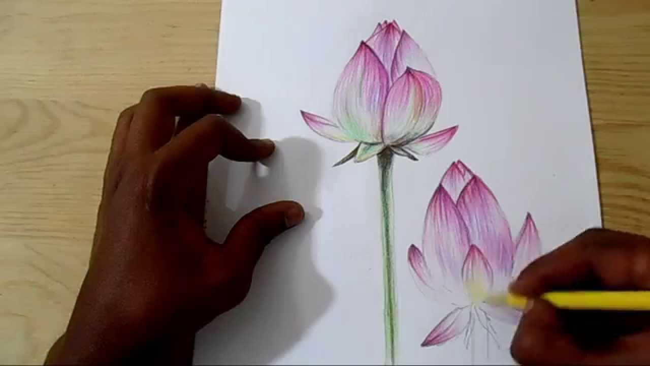 How To Draw And Shade Realistic Lotus