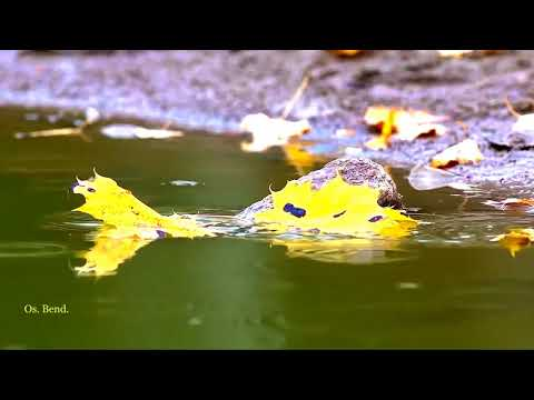Tony O'Malley - Autumn Leaves Mp3