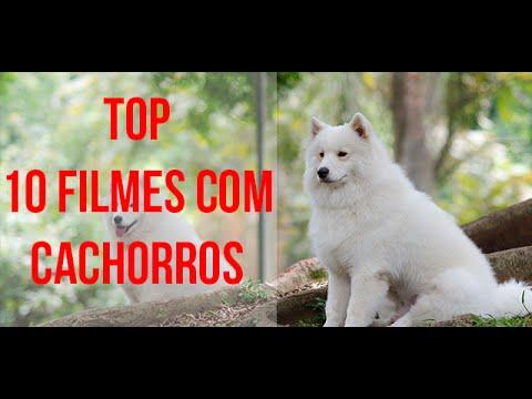 Trailer do filme A Caverna do Cachorro Amarelo