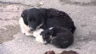 Мать и ее щенок, уличная семья, собака со щенком
