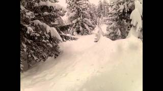 DEEP POWDER TREE RUNS SWITZERLAND Thumbnail
