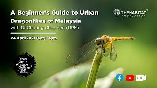 A Beginner's Guide to Urban Dragonflies of Malaysia