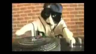 Dj Kitty Dubstep кот