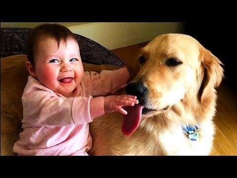 Funny Babies Laughing Hysterically at Dogs Compilation   Dog loves Baby video