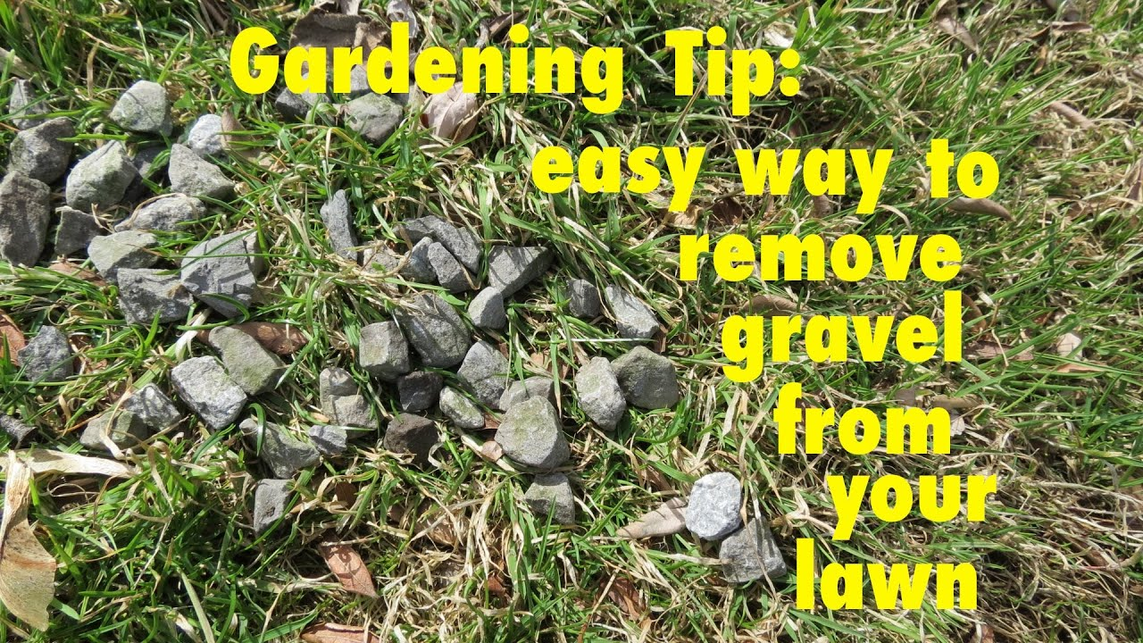 Gardening Tip How To Easily Remove Gravel From Your Lawn