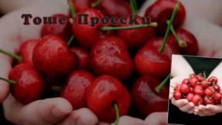 Tose Proeski- Cresa ( Tоше Проески-Цреша) lyrics
