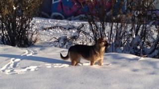 на тропе бездомных собак города Тюмень