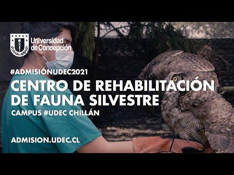 #AdmisiónUdeC2021: Centro de Rehabilitación de Fauna Silvestre #UdeC
