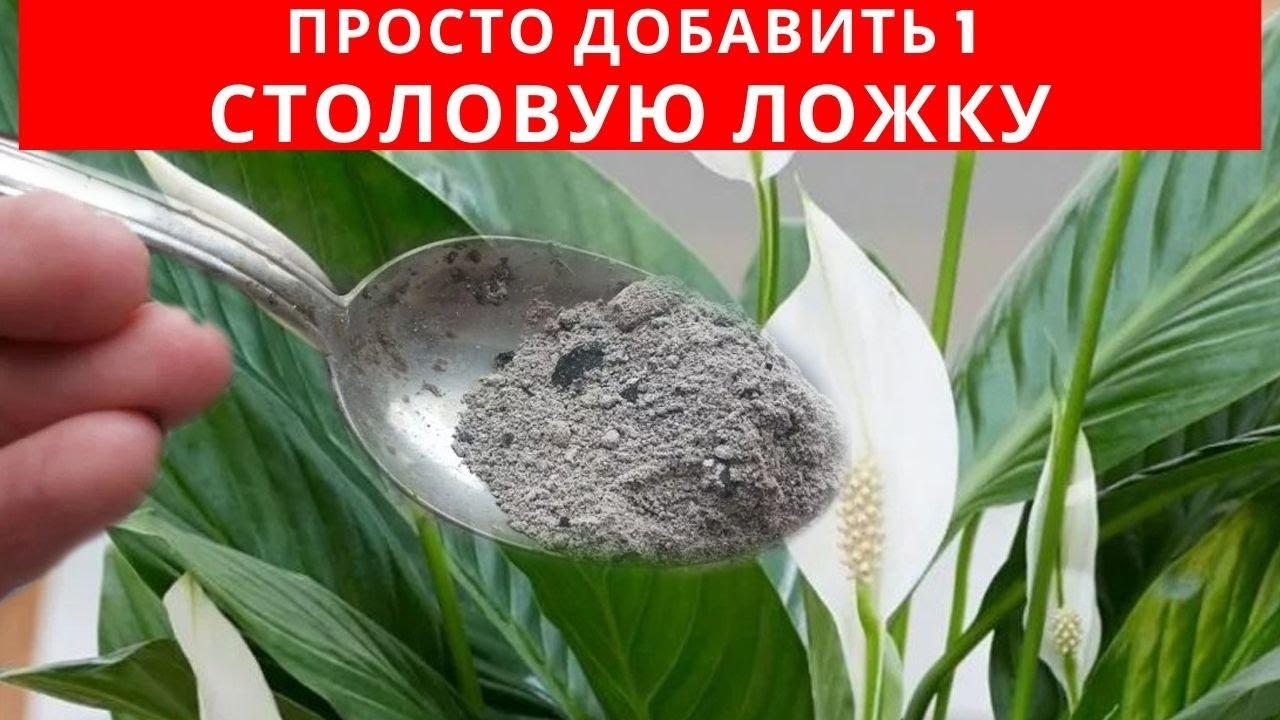 1 СТОЛОВАЯ ЛОЖКА этого вещества заставит БУРНО и ДОЛГО цвести КОМНАТНЫЕ РАСТЕНИЯ