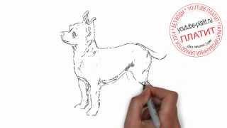 Как нарисовать дружелюбную собаку онлайн карандашом поэтапно