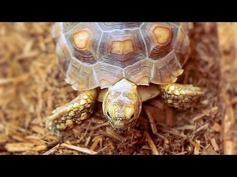 Caring For Pet Turtles Youtube