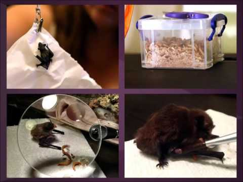 Intro To Bat Care Part Two