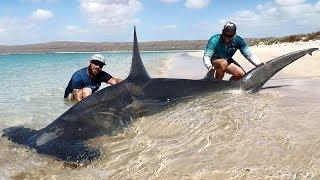 Man Catches Massive Hammerhead Shark From Beach