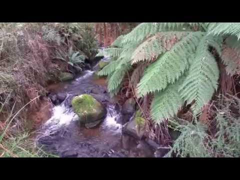 Rainforest in Victoria, Australia