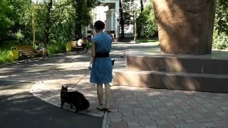 Лирикум, гуляем с мейн-кунами в парке, Норд 6,5 мес