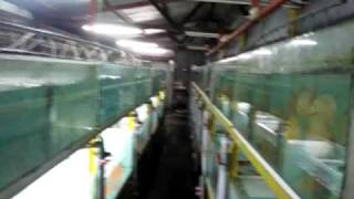 Lucky Tropical Fish Farm Whole Farm View Part 1