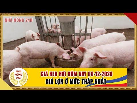 Giá heo hơi hôm nay 9/12/2020   Giá lợn hơi ghi nhận kỷ lục, rẻ nhất năm nay