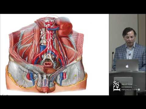Anatomy of the Lumbar Plexus by R. Shane Tubbs, PhD