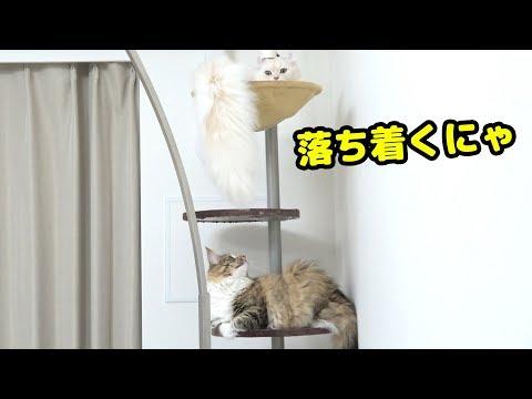 やっぱり猫は高いところが好き