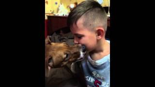 Собака отбирает соску!!!)