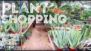 Plant Shopping at The Flower Bin | LONGMONT, CO