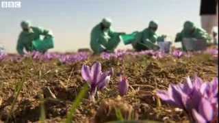 Afghanistan opium  Record yield from poppy fields