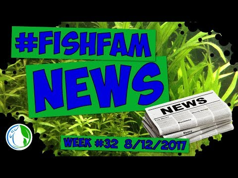 The Fish Family News For Week #32 - Extra! Extra!