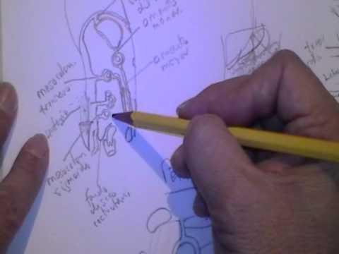 Embriologia do Canal Inguinalиз YouTube · Длительность: 1 мин19 с