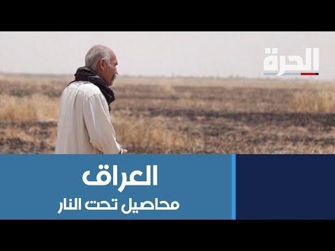 #داعش يشعل حقول المزارعين في العراق والخسائر فادحة  - 21:54-2019 / 5 / 30