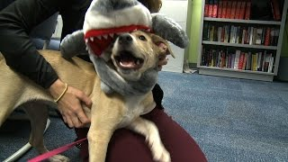 Homeless Pet Of The Week: Bellini Gets Ready For Halloween