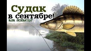 Уроки рыбалки на судака в сентябре!