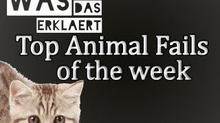 Animal Fails of the Week