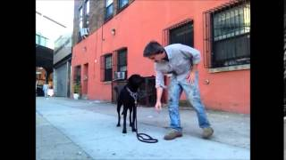 Teach Dogs Games, Work On Impluse Control............peter Caine, Brooklyn Dog Training