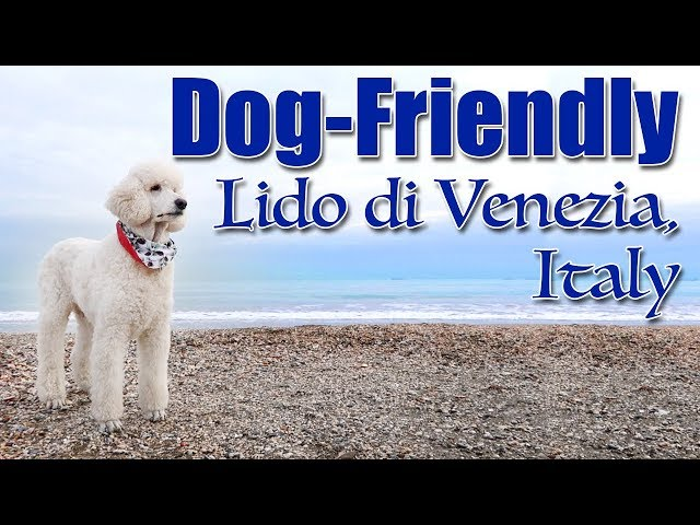 Dog Friendly Lido di Venezia
