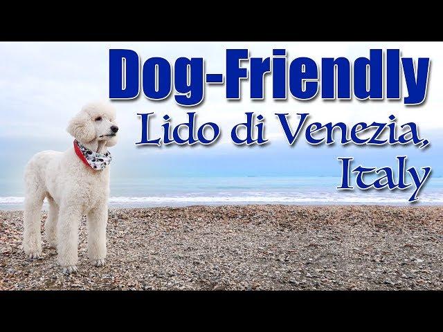 Dog Friendly Lido di Venezia