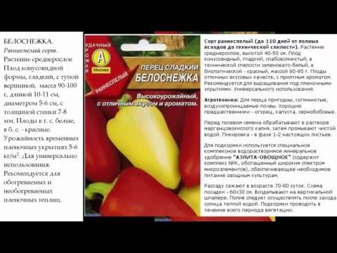 Болгарский перец: фото и описания – листья, семена. Сорта