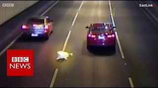 Near miss for Melbourne dog - BBC News