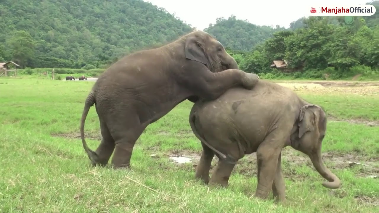 55 Koleksi Gambar Hewan Gajah Lucu Gratis Terbaik