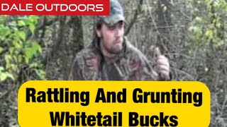 Rattling and Grunting Whitetail bucks