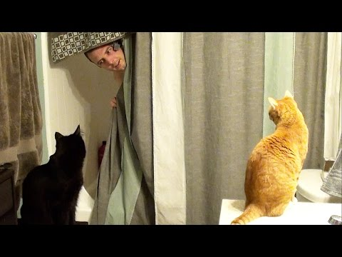 Living With Cats - House Guest Edition