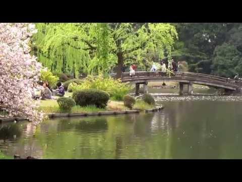 Shinjuku Gyoen - Japanese Park, Tokyo ● 新宿御苑